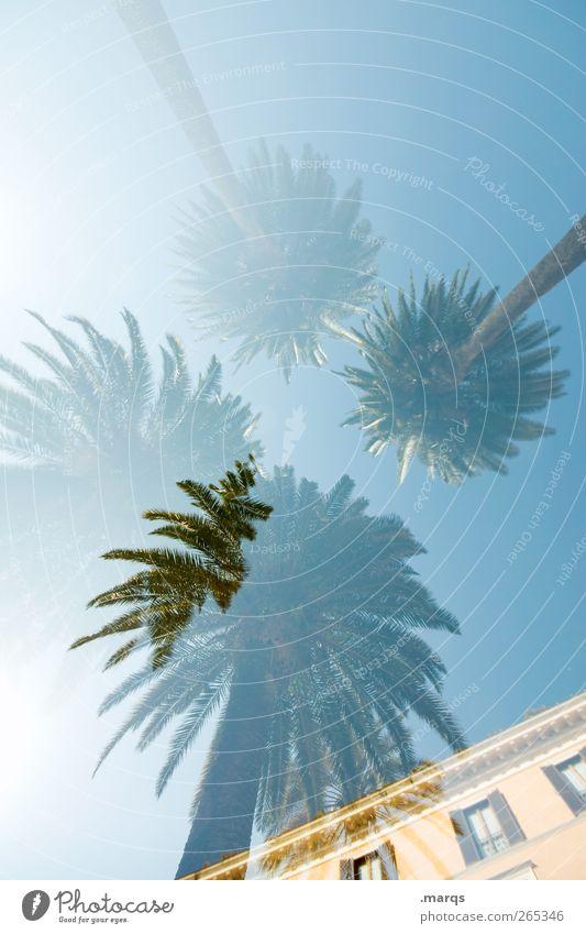 Summer Breeze Lifestyle Stil Ferien & Urlaub & Reisen Tourismus Ferne Sommer Sommerurlaub Umwelt Natur Pflanze Wolkenloser Himmel Klima Klimawandel