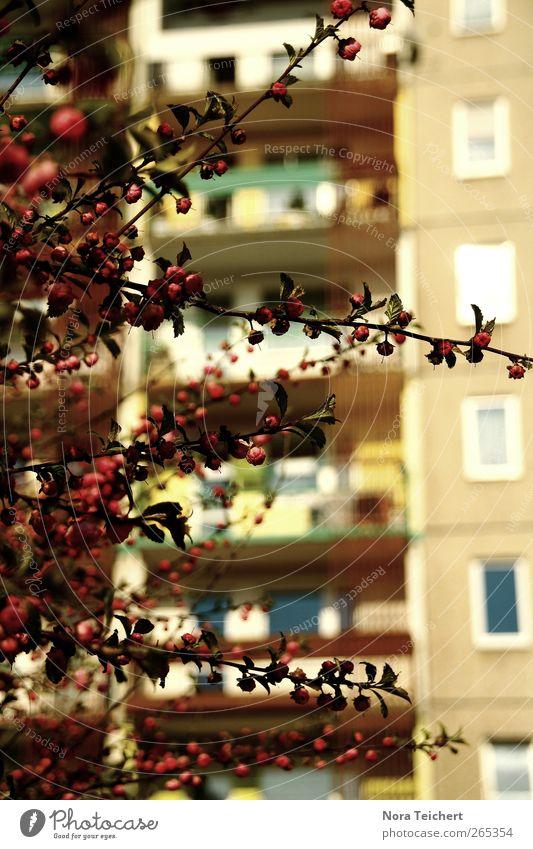Vor der Platte Natur Stadt schön Baum Pflanze Sommer Blatt Haus Umwelt Fenster Gefühle Garten Blüte Gebäude träumen Park