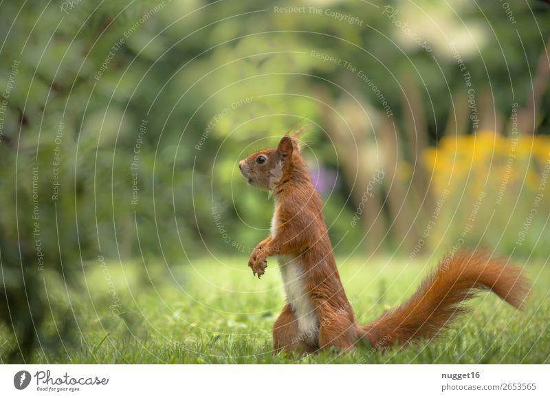 Eichhörnchen Natur Sommer Pflanze schön grün weiß Tier Wald schwarz Herbst gelb Umwelt Frühling Wiese Gras Garten