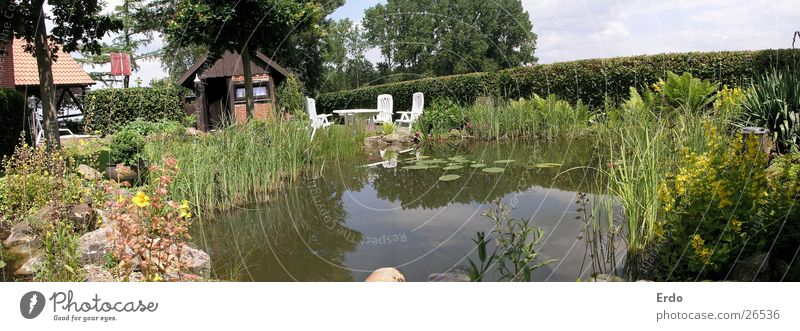 Weiter Garten Wasser Baum Garten Sträucher Hütte Teich Pflanze