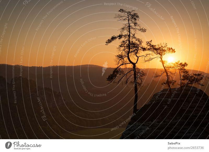 Morgenstimmung Umwelt Natur Landschaft Himmel Wolkenloser Himmel Horizont Sonnenaufgang Sonnenuntergang Herbst Schönes Wetter Baum Kiefer Hügel Felsen leuchten