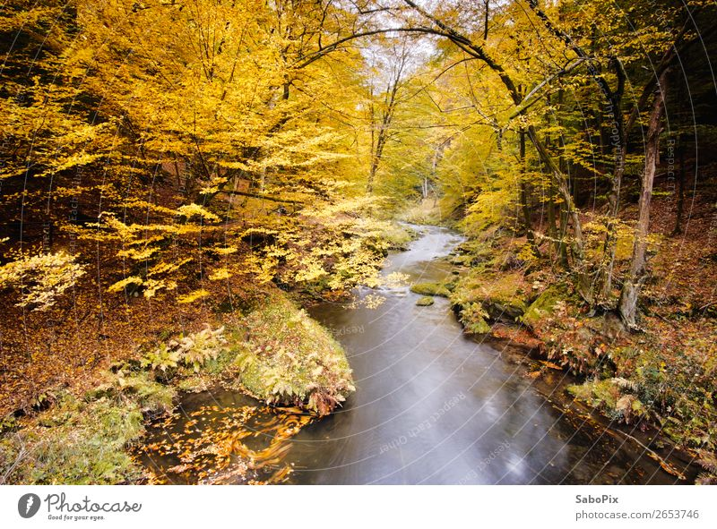 Herbstflüsschen Umwelt Natur Landschaft Pflanze Wasser Baum Flussufer braun gelb orange Stimmung ruhig Farbe Ferne Herbstlaub Herbstfärbung herbstlich Kamenice