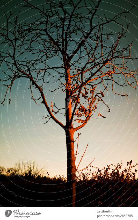 Baum Abend Abenddämmerung Berlin Farbenspiel Feierabend Himmel Himmel (Jenseits) Schöneberg Sonnenuntergang Stadt Stadtleben Herbst Winter Baumstamm Ast Zweig