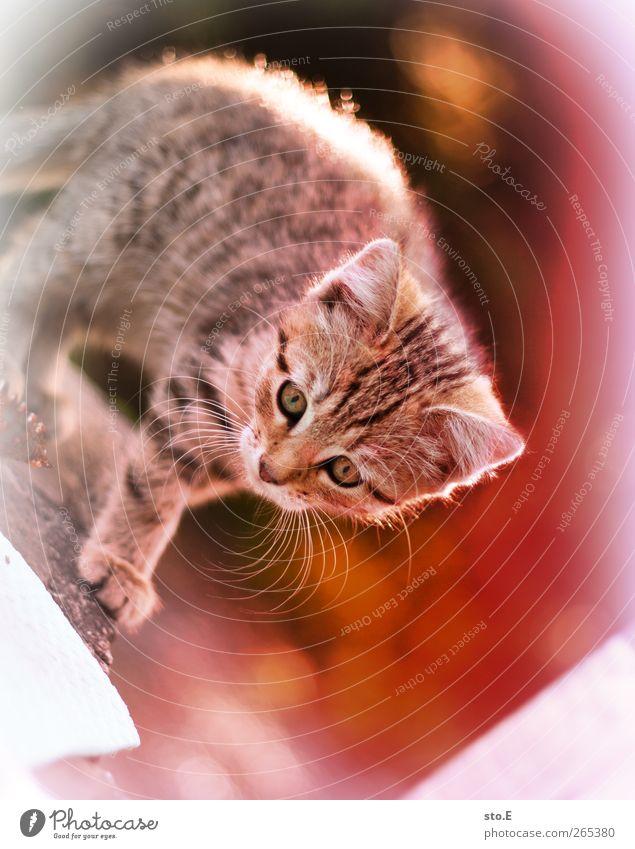 nanu? Katze Natur schön Sommer Freude Tier Spielen Garten Tierjunges Park Kindheit Wohnung Freizeit & Hobby Wildtier elegant niedlich