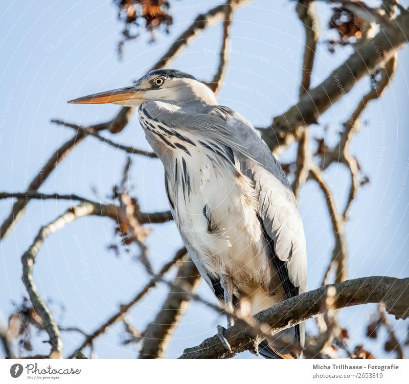 Fischreiher im Baum Himmel Natur blau weiß Erholung Tier Umwelt natürlich orange Vogel grau Wildtier stehen Feder Schönes Wetter