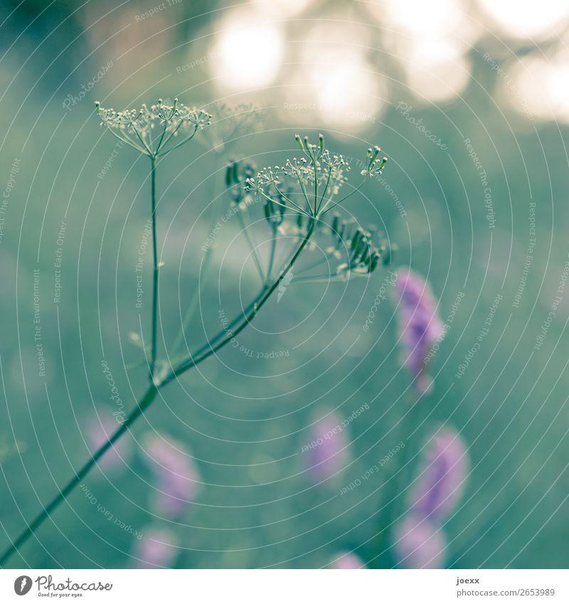 Und ich nehm' Dich bei der Hand Natur Pflanze grün Blume gelb Frühling Wiese Gras rosa Idylle Schönes Wetter