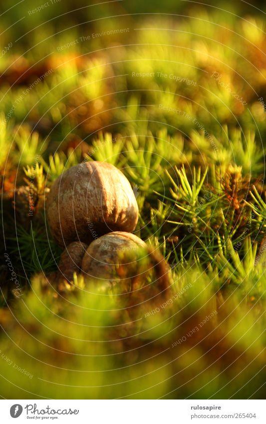 Appalachian Trail (untitled) #3 Natur grün Pflanze Sommer Umwelt Wiese Herbst Gras braun Erde natürlich Wachstum Boden Rasen Moos Samen