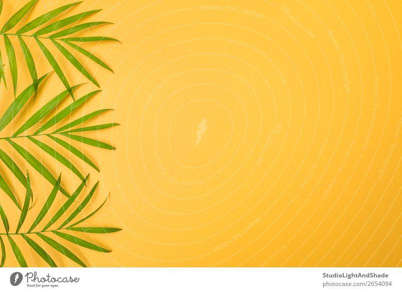 Grüne Palmblätter auf leuchtend gelbem Hintergrund Design exotisch Freude Glück schön Sommer Innenarchitektur Dekoration & Verzierung Gartenarbeit Natur Pflanze