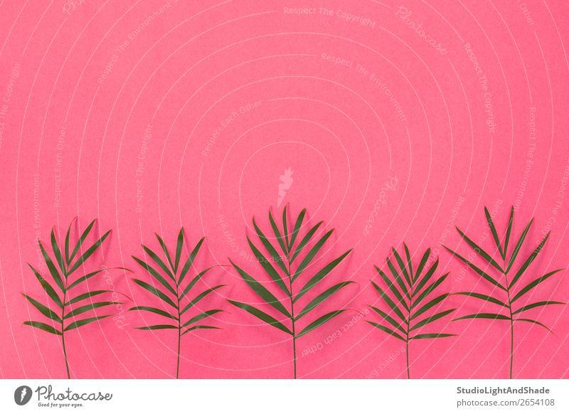 Grüne Palmblätter auf hellrosa Hintergrund Design exotisch schön Sommer Innenarchitektur Dekoration & Verzierung Gartenarbeit feminin Natur Pflanze Baum Blatt