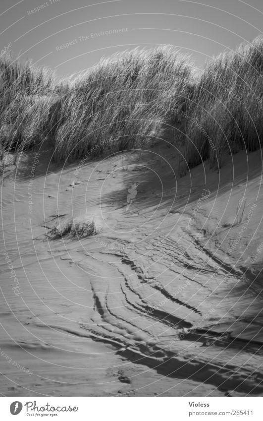 Risse in der Insel Landschaft Erde Sand Gras Strand Nordsee entdecken Düne Spiekeroog Dünengras Schwarzweißfoto Außenaufnahme Strukturen & Formen Tag