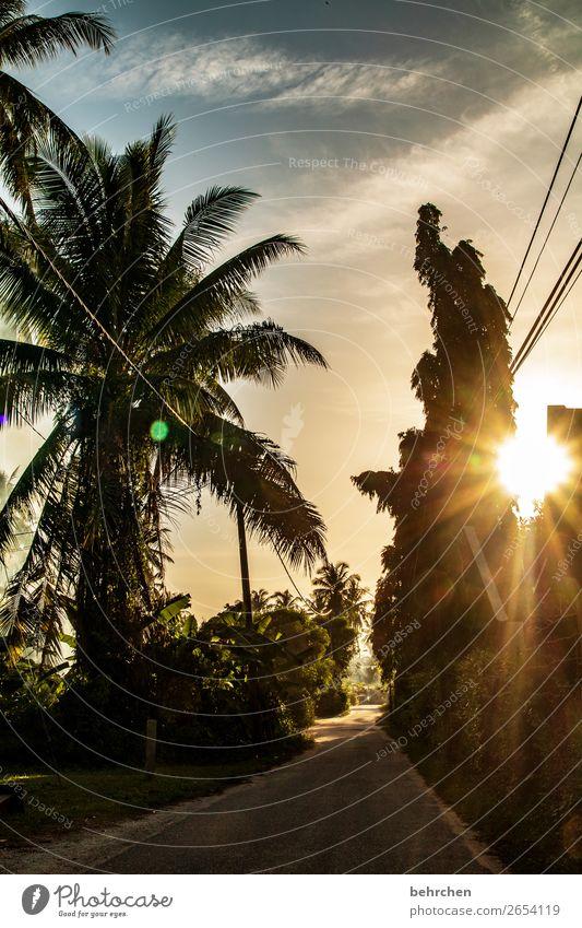 heiße luft | schwitzen ohne anstrengung Himmel Ferien & Urlaub & Reisen Natur schön Landschaft Sonne Baum Erholung Wolken Blatt Ferne Straße Tourismus