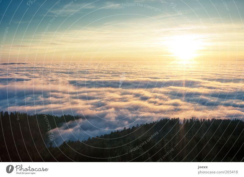 Schmerzfrei Himmel blau schön Sonne Wolken ruhig Wald schwarz Berge u. Gebirge gelb oben hell Horizont hoch Schönes Wetter Hoffnung