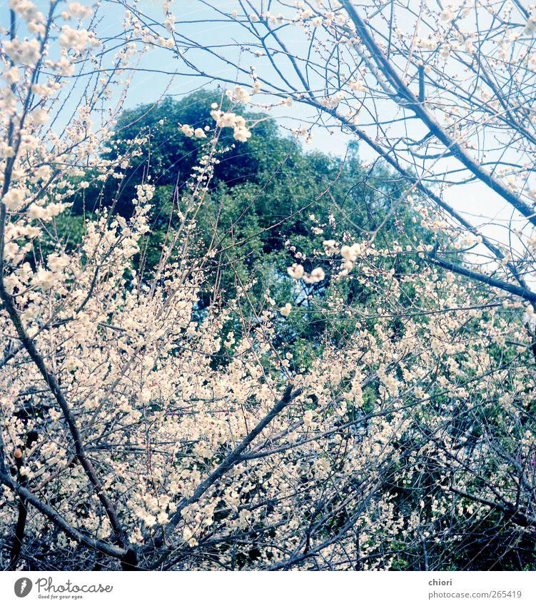 grün Baum Blume Frühling Luft Erde Felsen Ausflug Fröhlichkeit schlafen Coolness Zeichen Küssen Denkmal gebrauchen