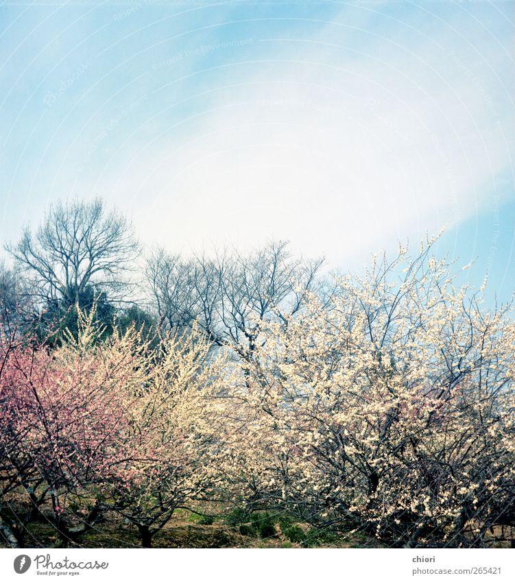 Himmel grün Blume Freude Graffiti Frühling Garten Luft gehen Felsen warten Seil schlafen gut Rauchen Aktenordner