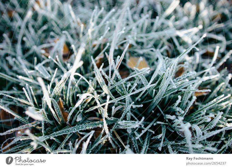 Nahaufnahme von gefrorenem Gras Herbst schön Botanik braun kühl kalt Farbe Dezember Umwelt fallen Flora Laubwerk Frost frostig Boden Raureif Eis eisig Rasen