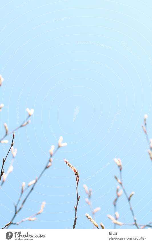 aufwärts sprießen... Himmel Natur Pflanze blau Baum ruhig Blüte Frühling Garten Horizont Luft Wachstum frisch Geburtstag Sträucher Perspektive