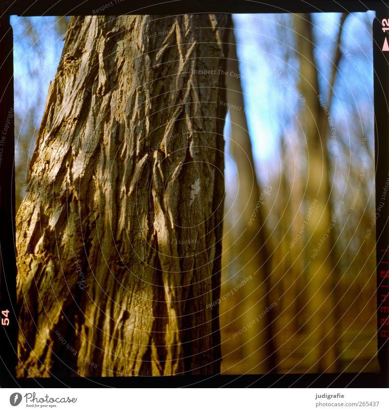 Wald Umwelt Natur Pflanze Schönes Wetter Baum natürlich Wärme braun Baumrinde Baumstamm trocken Haut Farbfoto Außenaufnahme Menschenleer Unschärfe