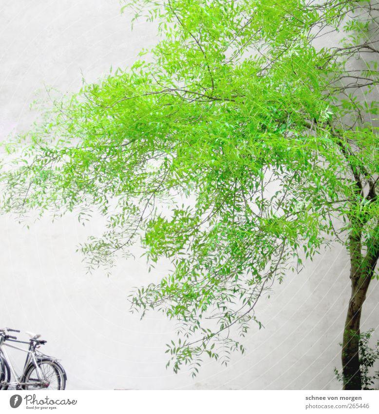 """es grünt so grün. Umwelt Natur Frühling Pflanze Baum Grünpflanze Haus weiß """"Baum Stamm Fahrrad Wand Beton"""" Farbfoto Außenaufnahme Tag Starke Tiefenschärfe"""