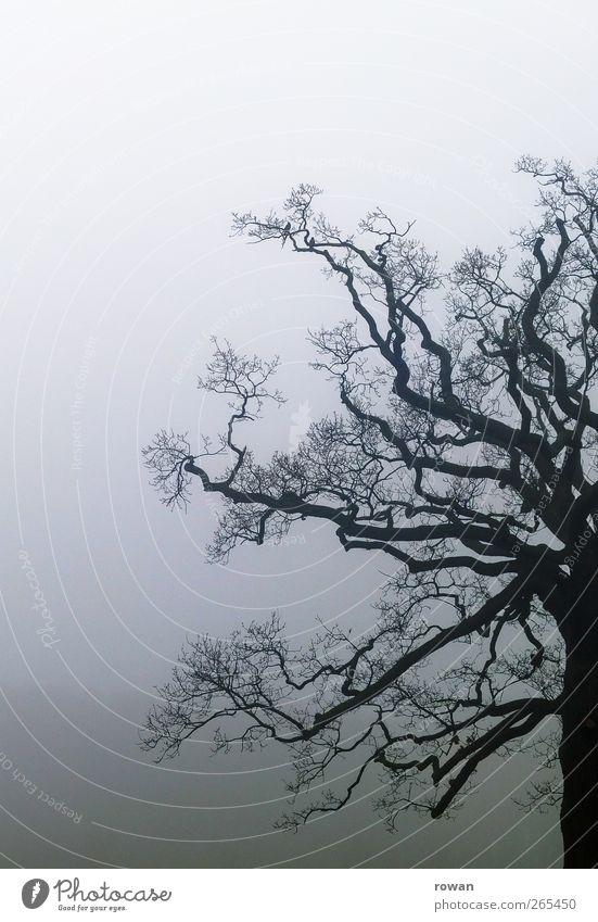 nebelbaum Umwelt Natur Landschaft schlechtes Wetter Unwetter Nebel Regen Garten Park Urwald bedrohlich dunkel gruselig kalt nass trist ruhig Einsamkeit