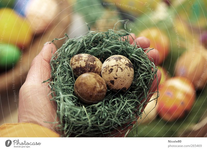 Tripple Eggs Natur Hand 3 Beginn Ostern Schutz festhalten Ei zerbrechlich Nest Eierschale Osternest Wachtelei