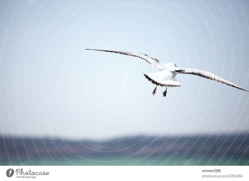 Unbeschwertheit. Tier Abenteuer fliegen Meer Küste fliegend Meeresvogel Möwe Möwenvögel Vogel Vogelperspektive Ferne Horizont Flügel Schweben Wind Idylle