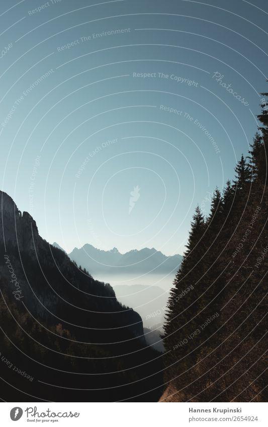 Der Berg ruft Alpen Nebel Himmel Berge Freiraum Tanne Tannen Bäume dunkel Berge u. Gebirge Landschaft Natur Felsen Panorama (Aussicht) Gipfel Ferne Tag