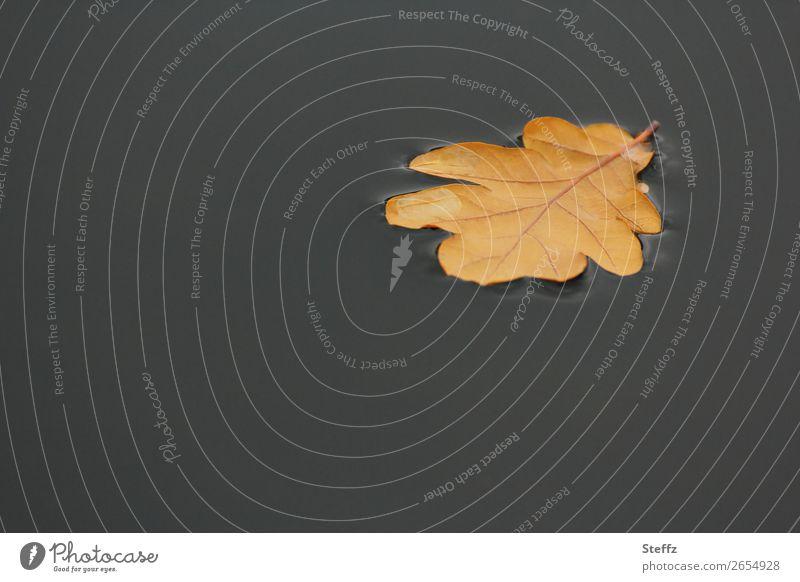 floating Umwelt Natur Pflanze Wasser Herbst Blatt Eichenblatt Herbstlaub Blattadern Teich Pfütze schön trist braun grau ruhig Herbstgefühle Novemberstimmung
