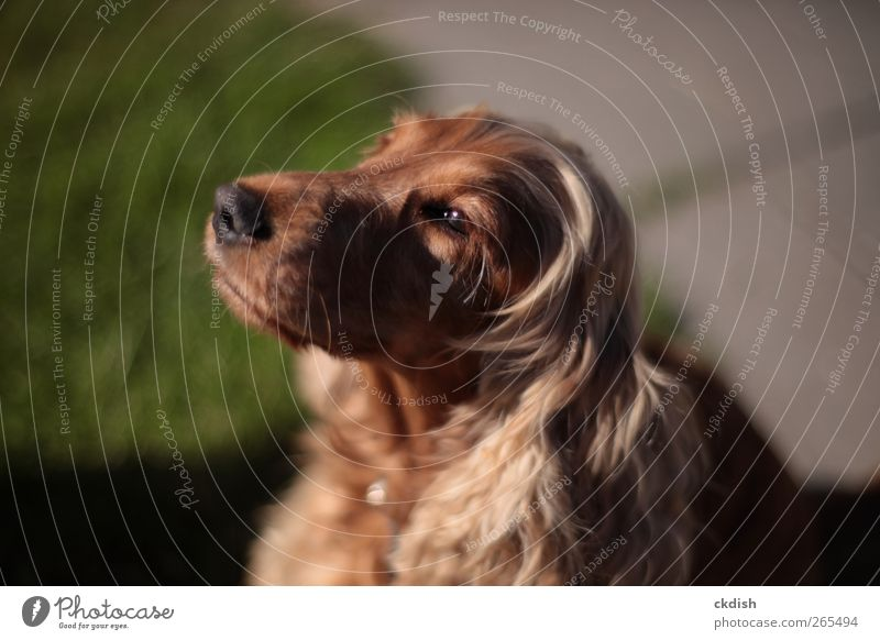 Hund grün Tier braun Haustier