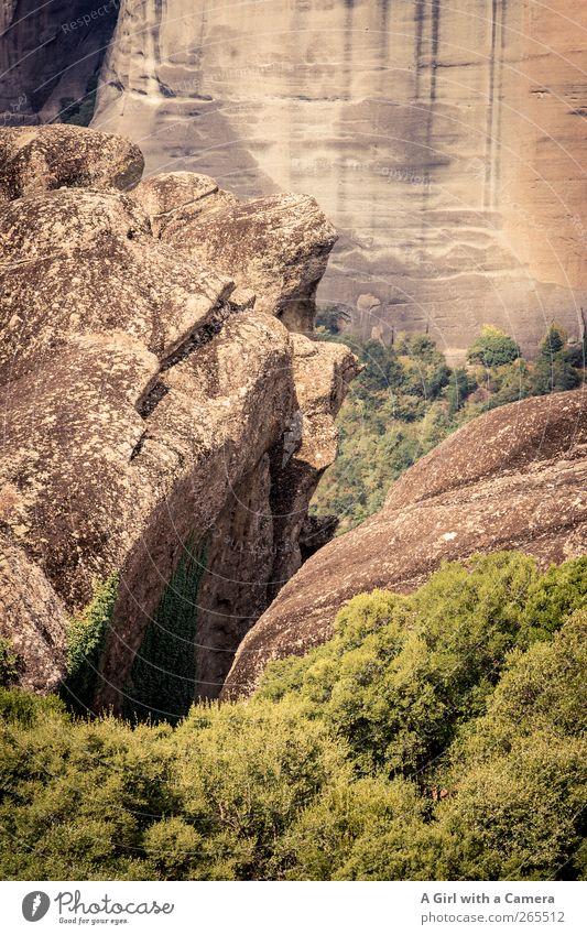like a rock Umwelt Natur Landschaft Pflanze Urelemente Erde Sommer Schönes Wetter Baum Hügel Felsen Berge u. Gebirge Gipfel alt authentisch außergewöhnlich