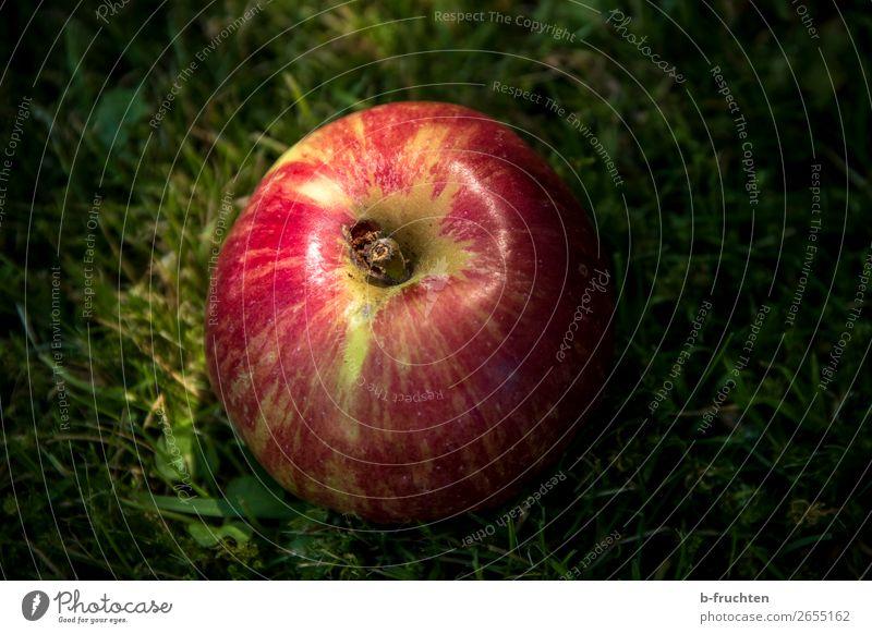 Schneewittchen-Apfel Lebensmittel Frucht Ernährung Picknick Bioprodukte Vegetarische Ernährung Gesunde Ernährung Sommer Herbst Gras wählen Essen genießen frisch