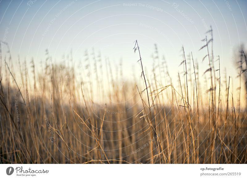 Sonntag Natur Pflanze Wolkenloser Himmel Sonne Sonnenaufgang Sonnenuntergang Sonnenlicht Herbst Winter Schönes Wetter Gras Garten Park Wiese Feld Idylle