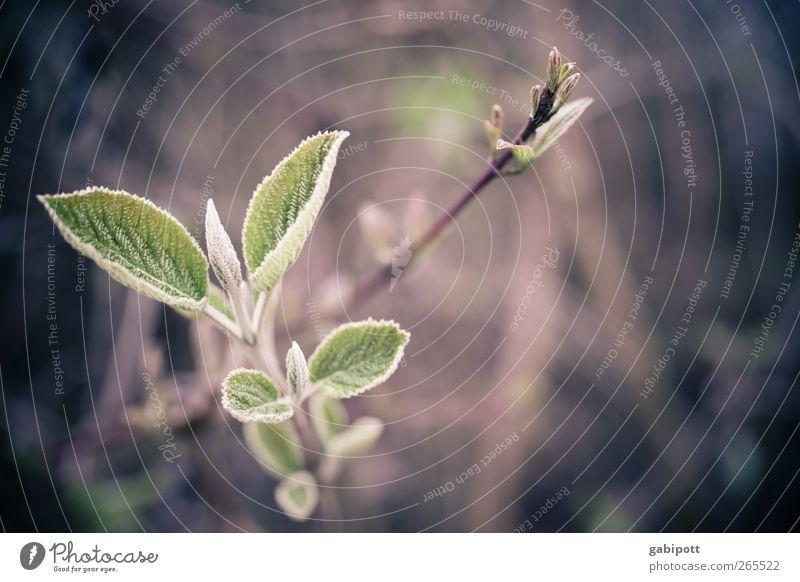 wachstum Umwelt Natur Frühling Pflanze Sträucher Blatt Blüte Blühend Wachstum wild braun grün Lebensfreude Frühlingsgefühle Kraft Wandel & Veränderung