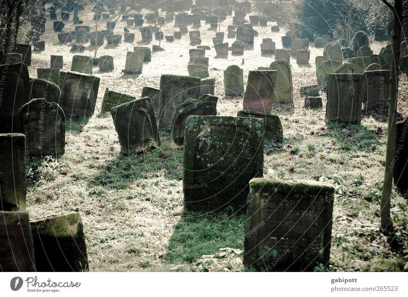 stille alt grün ruhig Tod Gefühle Stein Traurigkeit braun Trauer Ewigkeit Schmerz durcheinander Sehenswürdigkeit Friedhof trösten erinnern