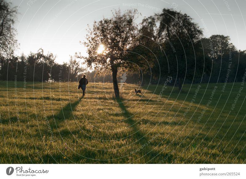 abenlicht Umwelt Natur Landschaft Pflanze Sonnenaufgang Sonnenuntergang Herbst Schönes Wetter Blume Gras Nutzpflanze Wiese Feld Hügel Duft natürlich grün
