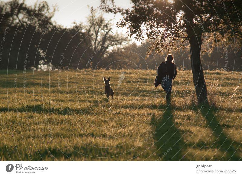 abendlicht 2 Natur grün Baum Pflanze Sonne Erholung Umwelt Landschaft Wiese Herbst Wege & Pfade Bewegung Gras Zufriedenheit Feld Sträucher