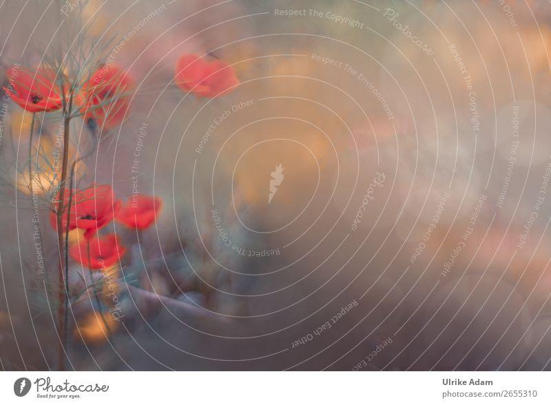 Mohn (Papaver) - Blumen und Natur elegant Stil Design Wellness harmonisch Wohlgefühl Erholung Meditation Spa Dekoration & Verzierung Tapete Postkarte