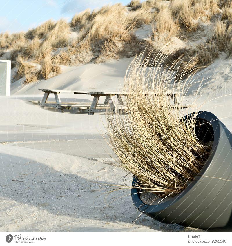 windschief Natur Ferien & Urlaub & Reisen Pflanze Meer Strand Erholung Umwelt Landschaft Sand Wind Insel Ausflug Sträucher Kunststoff Nordsee Stranddüne