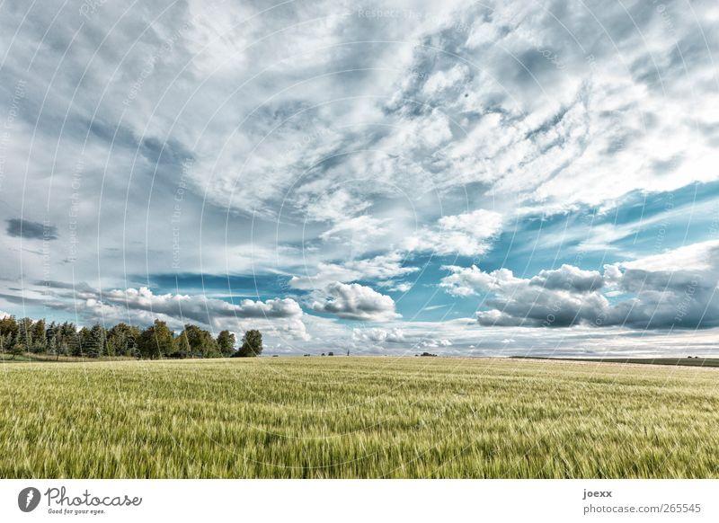 Agro Himmel Natur Sommer Wolken hell Horizont Feld Idylle Schönes Wetter Landschaftsformen Nutzpflanze