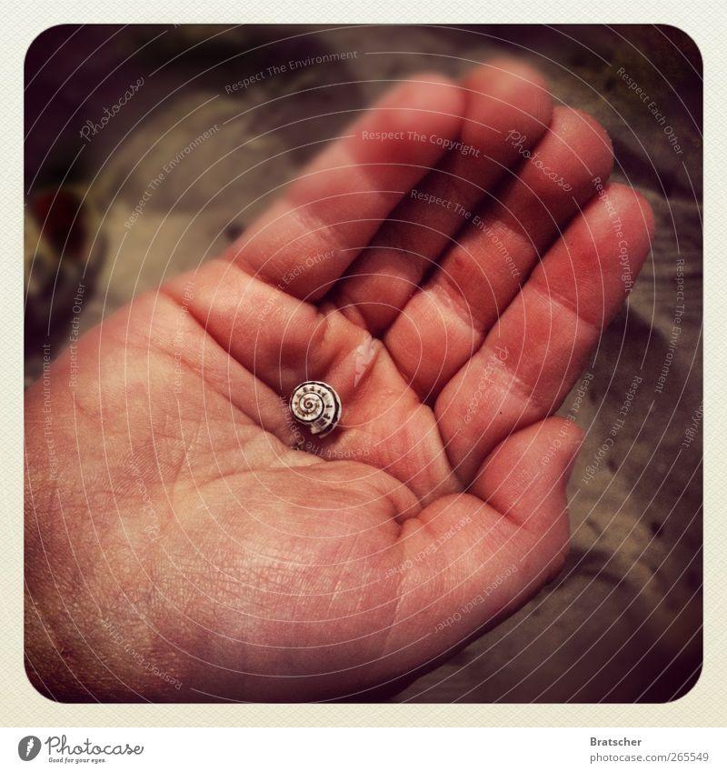 Traum Hand Finger Sand Schnecke klein weich Schutz halten Schatz finden behüten hart winzig Lebenslinie Detailaufnahme Vogelperspektive
