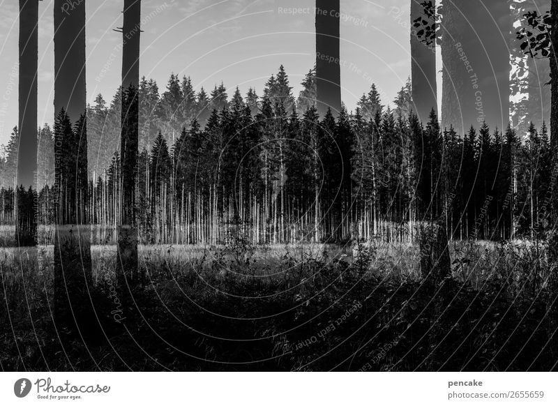 komplex | parallelwelt Natur Landschaft Wald dunkel Doppelbelichtung