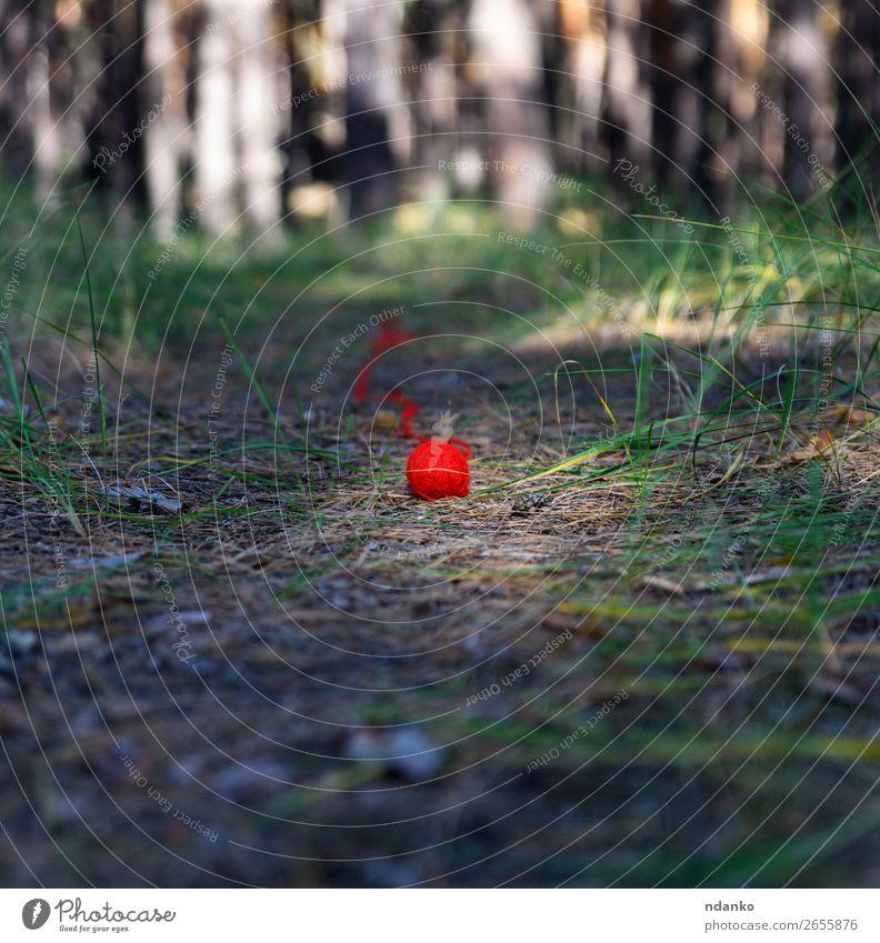 abgewickeltes kleines rotes Wollgarnstück stricken Seil Natur Landschaft Baum Gras Park Wald grün Stimmung Erholung Farbe Ferien & Urlaub & Reisen Idee Idylle