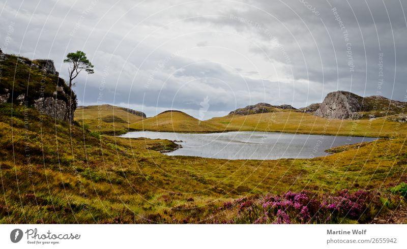 Ferry Lochs Natur Landschaft Pflanze Wolken Herbst See Großbritannien Schottland Europa stark Kraft Gorßbritannien Farbfoto Gedeckte Farben Außenaufnahme