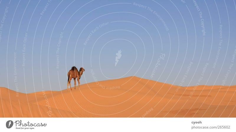 Wanderer Himmel Natur Sommer Tier Einsamkeit Ferne Wärme Kraft gehen Klima wandern frei Kraft Suche Ziel Wüste