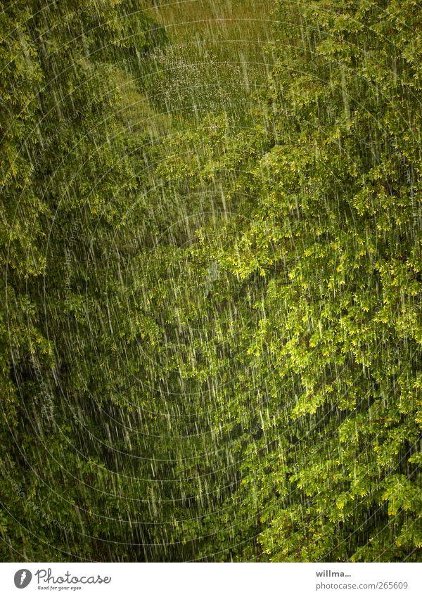 Regen bringt Segen Baum Umwelt Natur Klima Wetter schlechtes Wetter Unwetter Wald nass grün Regenwetter