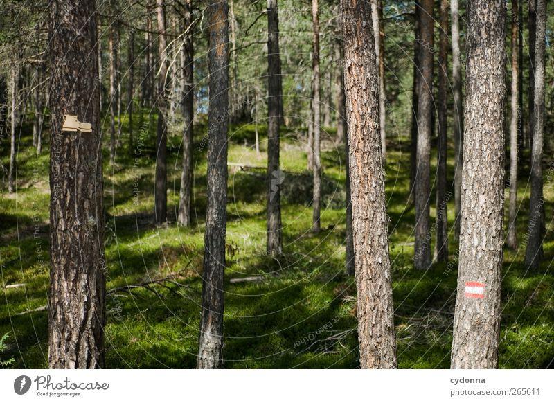 Wanderzeichen Natur Baum Ferien & Urlaub & Reisen Sommer Einsamkeit ruhig Wald Umwelt Landschaft Leben Berge u. Gebirge Wege & Pfade Gesundheit Freizeit & Hobby