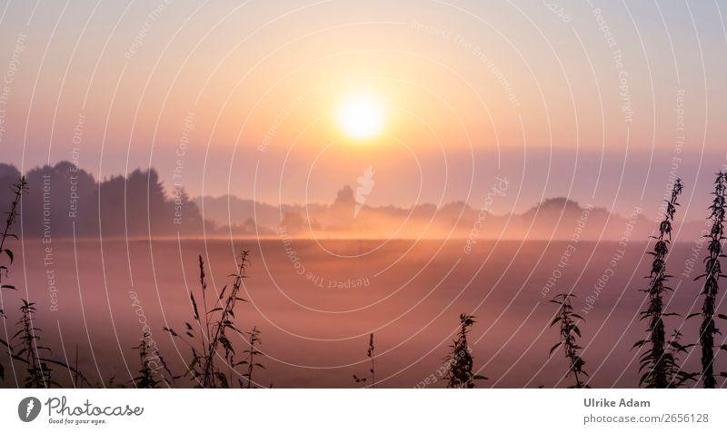 November-Blues Natur Ferien & Urlaub & Reisen Pflanze Landschaft Erholung Winter Hintergrundbild Herbst Umwelt Deutschland orange leuchten Nebel Idylle Romantik