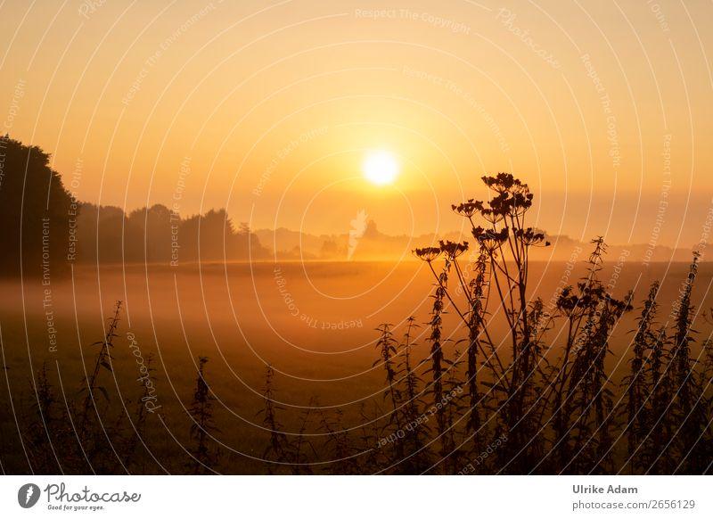 Morgenerwachen Ferien & Urlaub & Reisen Pflanze Landschaft Erholung ruhig Winter Herbst Traurigkeit Deutschland orange Design Dekoration & Verzierung leuchten