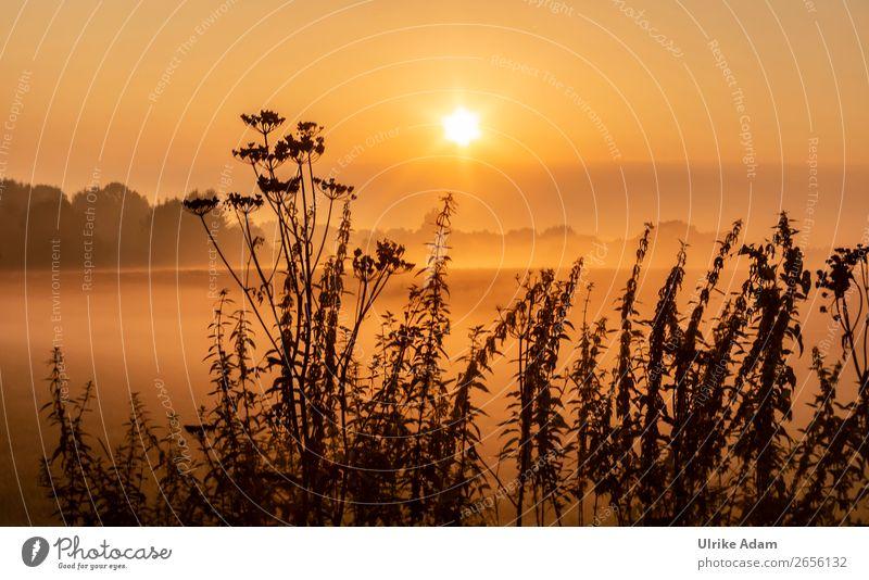 Natur und Landschaft Freiheit Dekoration & Verzierung Tapete Trauerfeier Beerdigung Herbst Winter Schönes Wetter Nebel Pflanze Wildpflanze Brennessel Feld Moor