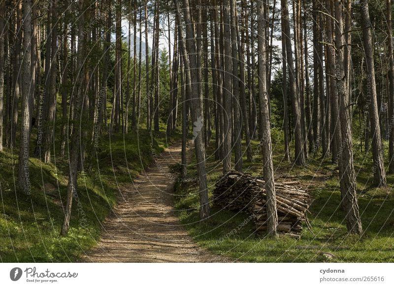 Der Weg Natur Baum Ferien & Urlaub & Reisen Einsamkeit ruhig Wald Ferne Erholung Umwelt Landschaft Leben Berge u. Gebirge Holz Freiheit Wege & Pfade träumen