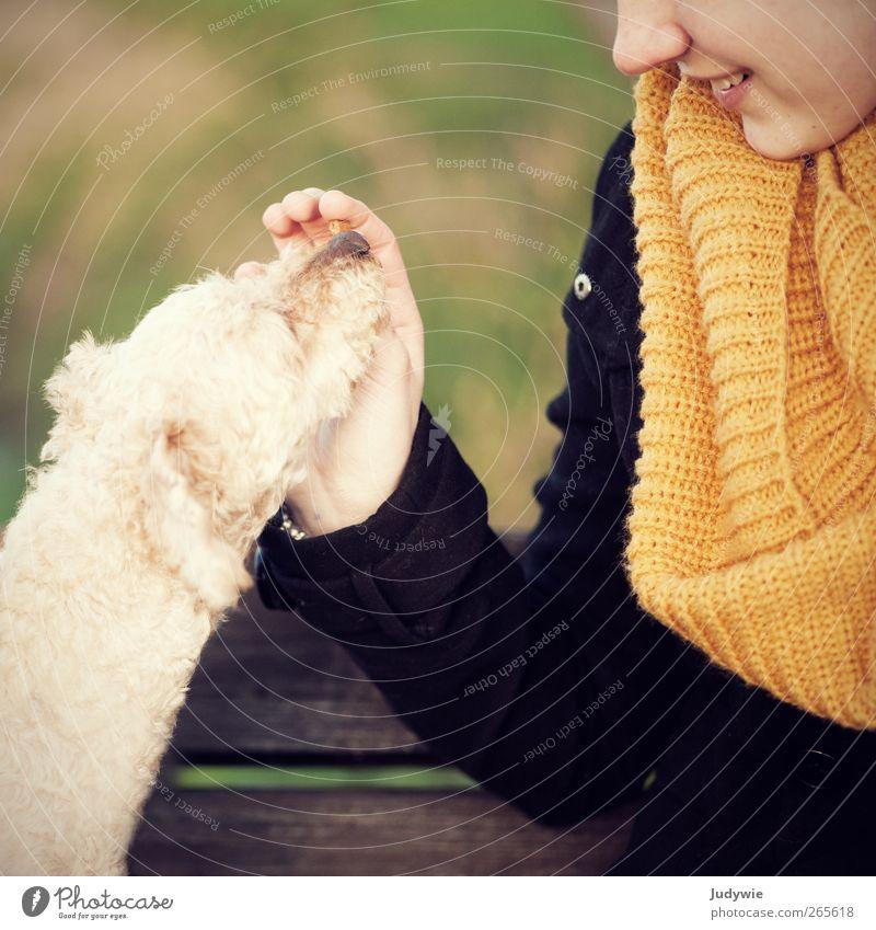 Zuneigung Mensch Kind Hund Natur Jugendliche Mädchen Freude Tier gelb Umwelt feminin Herbst Gefühle Glück Mode Freundschaft